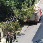 """La gloriosa Scuola """"Archi Centro"""" vittima dell'abbandono, crolla un albero"""